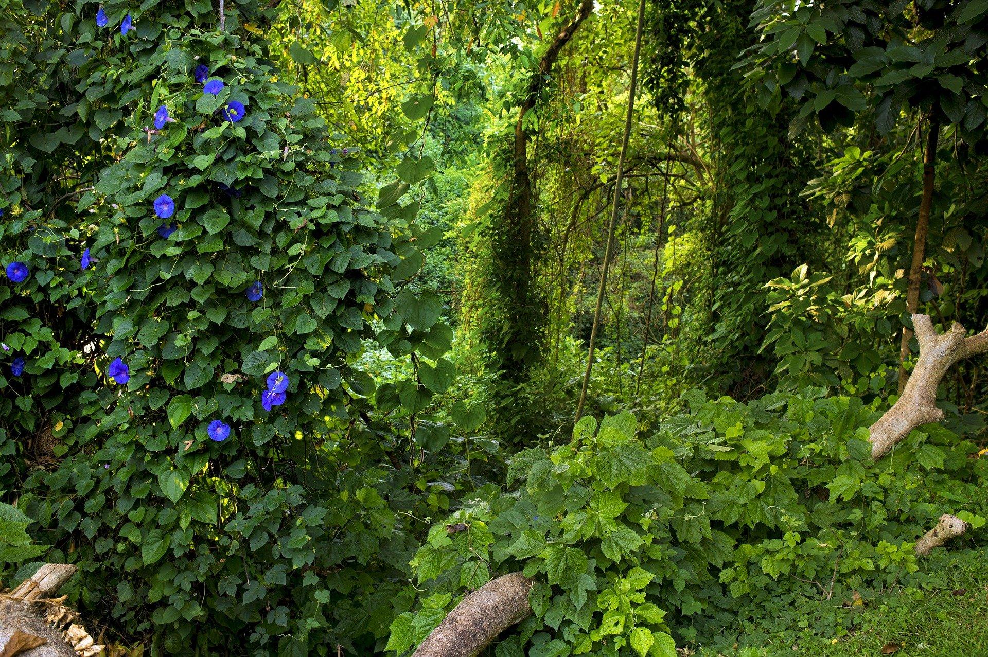 jungle-2108882_1920
